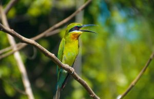 Wall decoration - Bee eater(L10)