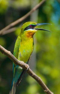 Wanddecoratie - Bee-eater (S10)