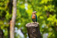 Wanddecoratie - Kingfisher(L07)