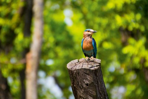 Wanddecoratie - Kingfisher(L07)
