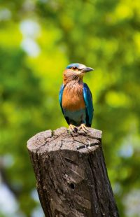 Wall Decoration - Kingfisher (S06)