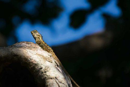 Wanddecoratie - Lizard(L04)