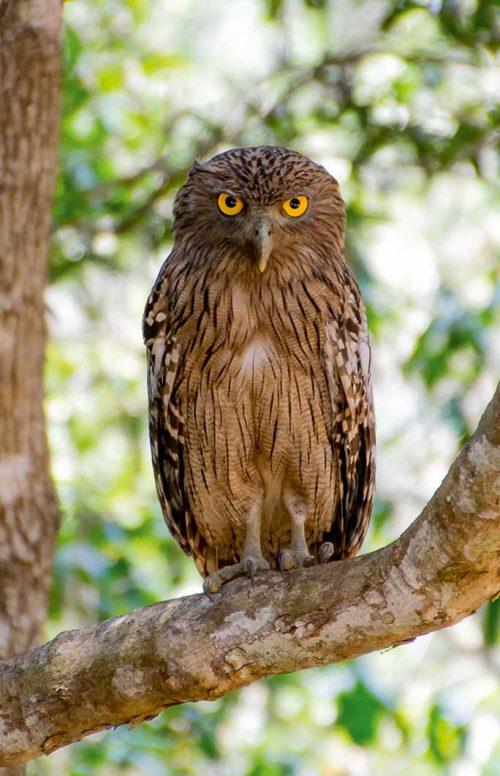 Wanddecoratie - Eagle owl (S08)