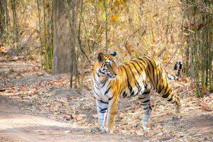 Wall decoration - Tiger (L5)