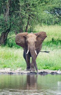 Olifanten Ngorongoro